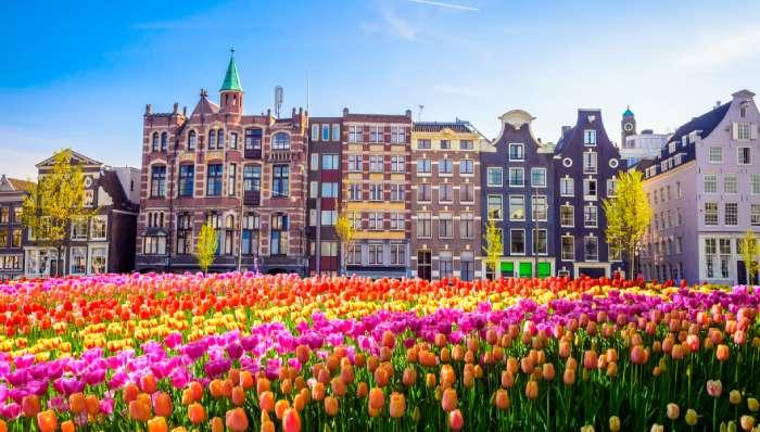 holandske lale u amsterdamu